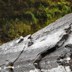 Grey Rock 4