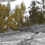 Grey Rock 6